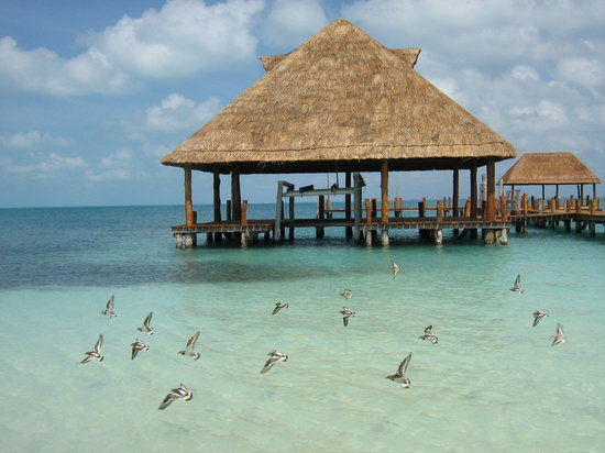 Cancún, México: Birds in flight