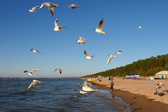 Jurmala, Latvia: Seaguls