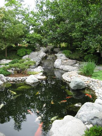 Koi fish pond picture of japanese friendship garden san for Japanese garden with koi pond