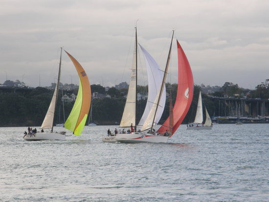 Regatta Auckland Harbour