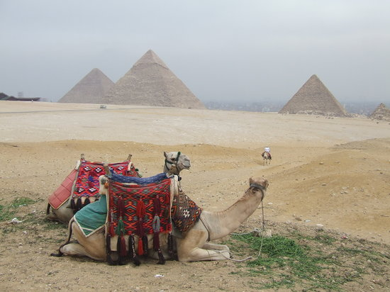 Giza, Egypt: Camels and Pyramids 2