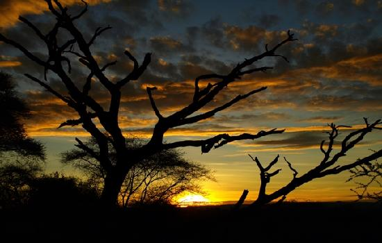 Tarangire National Park, Tanzanie : Tarangire Sunset