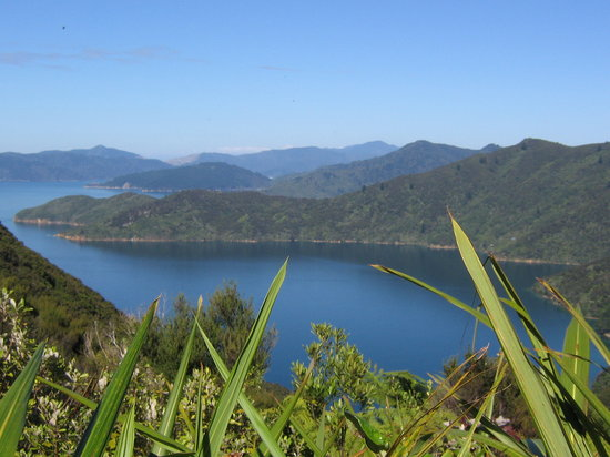Picton, New Zealand: Everything was so BEAUTIFUL
