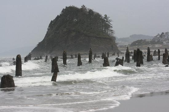 Ghost Forest At Proposal Rock Picture Of Neskowin
