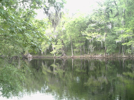High Springs, FL: Reflecting off the Santa Fe River