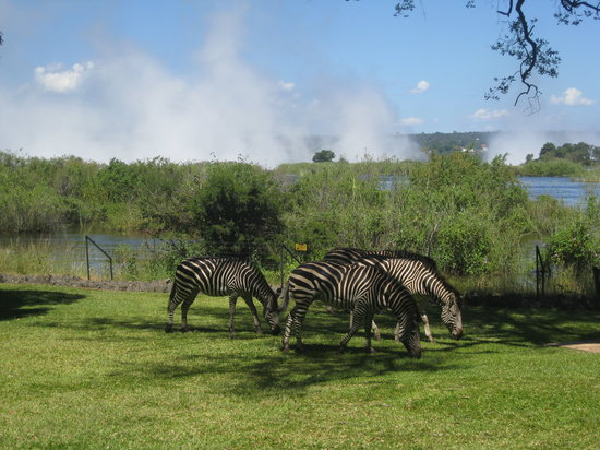 Livingstone, Zambia: Make Way for Zebras