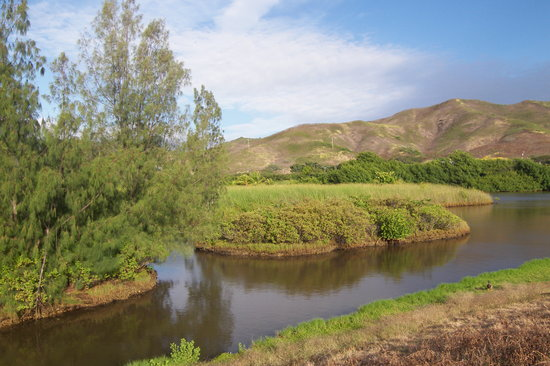 Kailua, HI: Marsh View