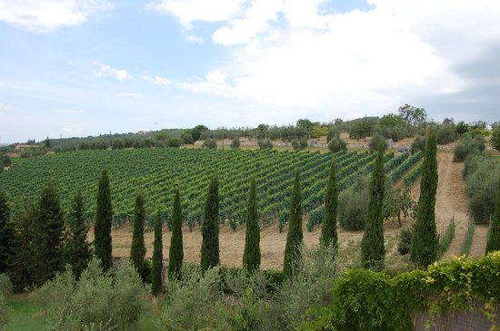 Radda in Chianti, Italy: A scenic view of Tuscany from the pool patio