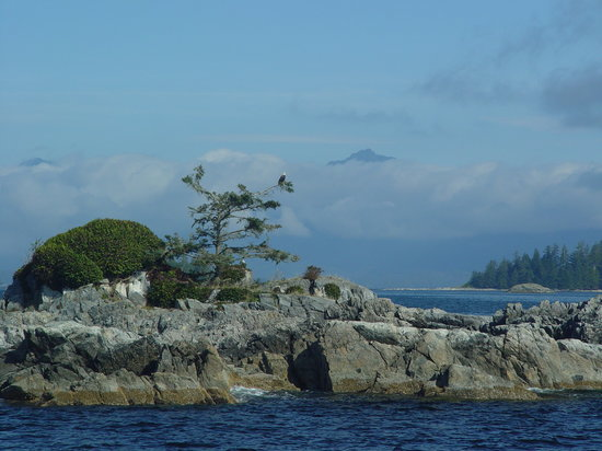 Ucluelet, Canada : Pair of Eagles