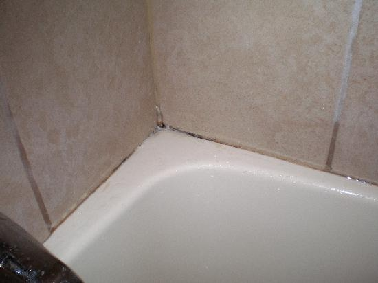 Mold in bathroom shower 28 images how to prevent bathroom mold from taking over allergy air - How to remove black mold in shower ...