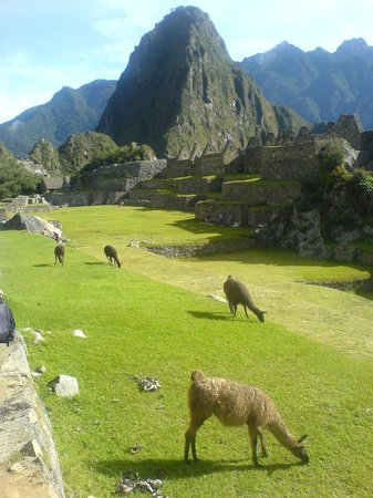 Machu Picchu, Per: That Llamas May Safely Graze