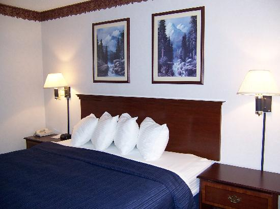 Quality Suites Albuquerque - Gibson Blvd : New bed, linens and bedclothes 
