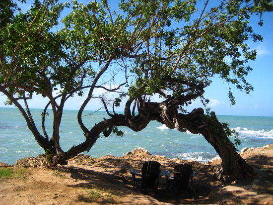 Treasure Beach, Jamaica: Jake's tree
