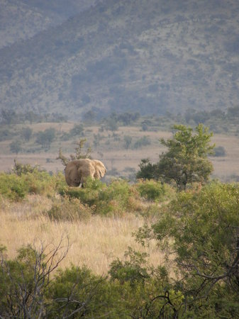 Pilanesberg National Park, South Africa: elephant