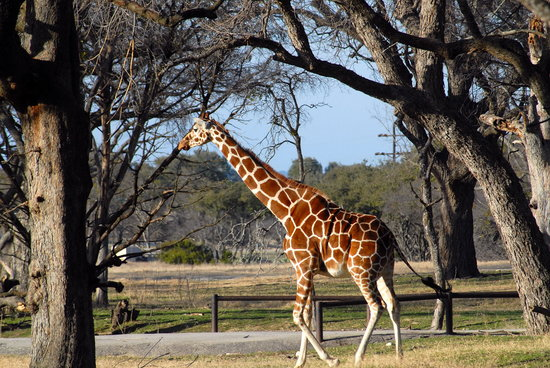 Glen Rose, TX: Fossil Rim Wildlife Center