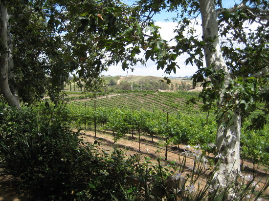 Temecula, Калифорния: A nice picnic area overlooking the vineyards