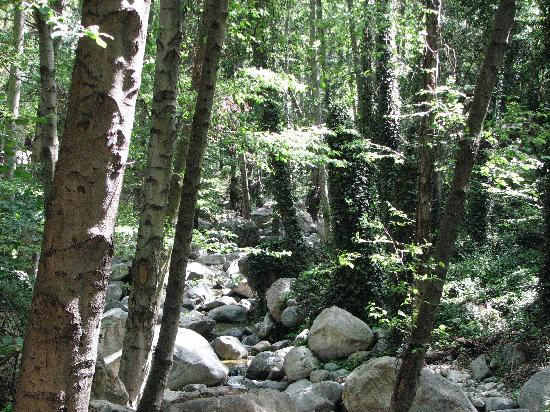 Big Santa Anita Canyon: Sturtevant Falls Trail