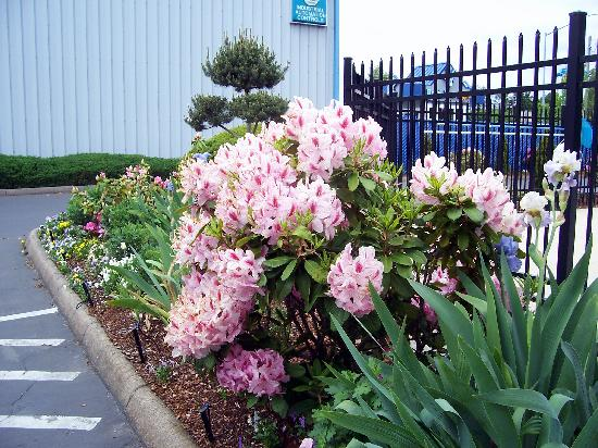 Howard Johnson Inn Salem: Flowerbed  outside the office door