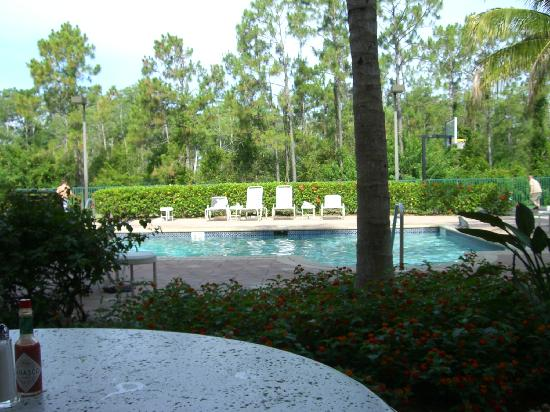 Hawthorn Suites of Naples: Pool