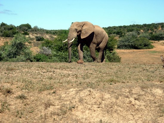 ‪Addo Elephant National Park‬