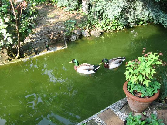 Duck pond picture of villa san pietro montichiari for Como se hace un lago artificial