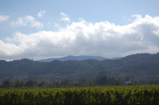 Napa Valley, Californie : view from opus one 