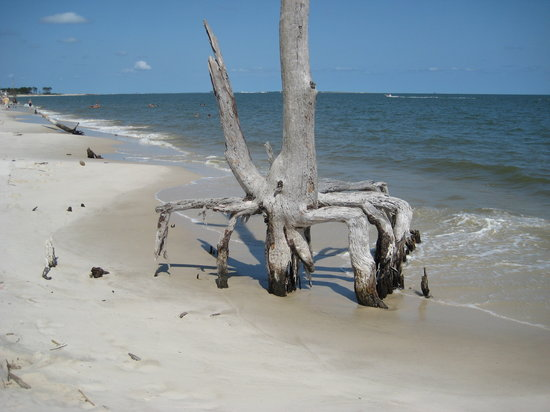 Dauphin Island, AL: Hurricane damaged trees