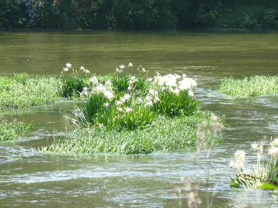 : Cahaba River, West Blocton - cahaba lilies