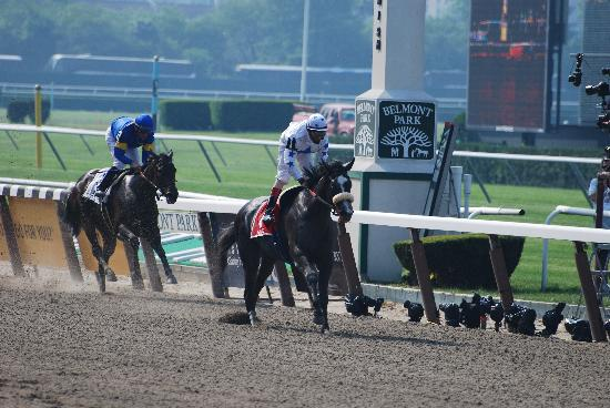 Belmont Park Race Track Elmont Reviews Of Belmont Park
