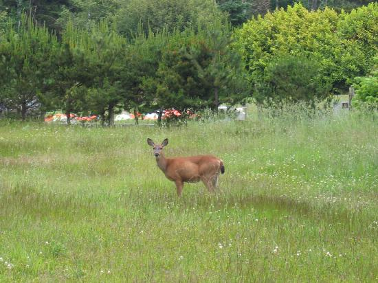 Westport Bayside Bed &amp; Breakfast: Deer were in the field multiple times each day