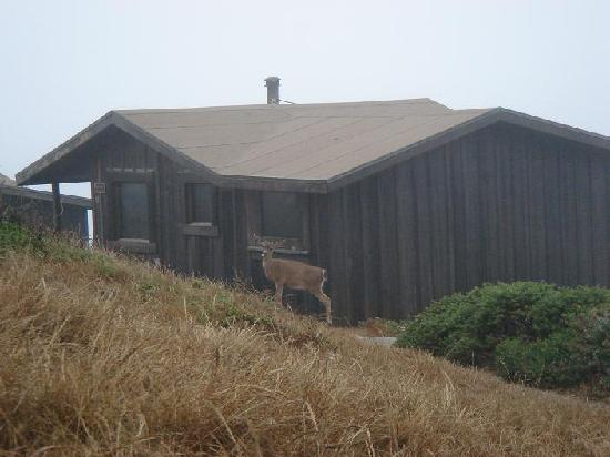 Steep Ravine Cabins: Deer eating at about 6:30am, next to our neighbor's cabin