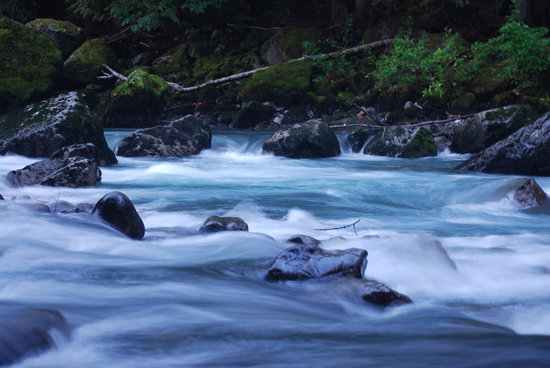 Snoqualmie, : Nooksack River, Douglas Fir CG