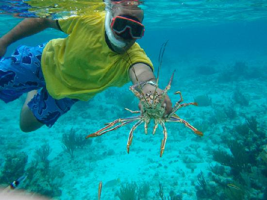 Grand Cayman: Peter with a lobster.