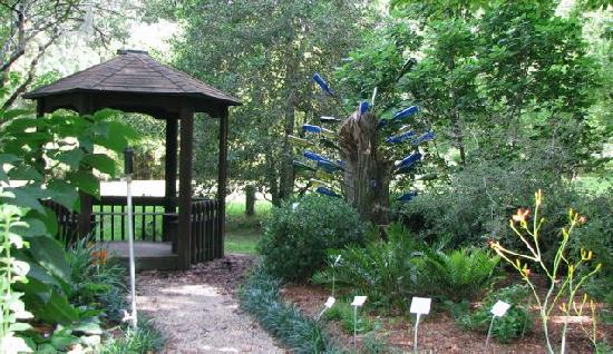 Bottle tree by gazebo kanapaha gardens gainesville fl - Botanical gardens gainesville fl ...