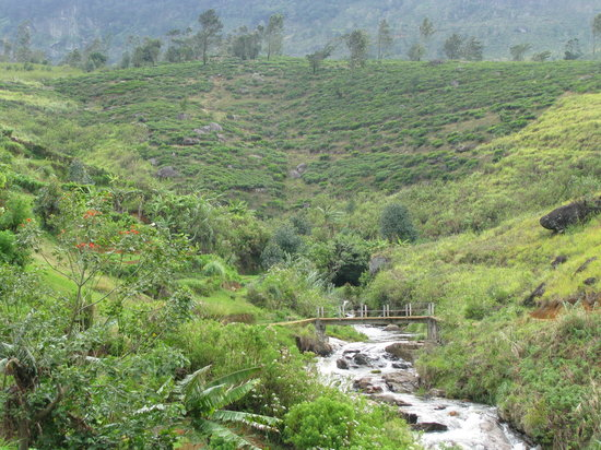 Nuwara Eliya attractions