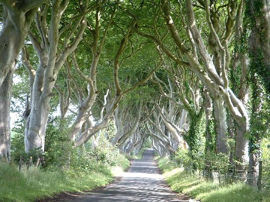 Condado de Antrim, UK: Dark Hedges, Stranocum, Co Antrim; N.Ireland