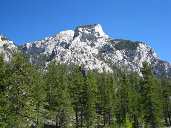 Mount Charleston, NV: Spring Mountains, NV