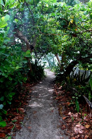 isla de Captiva, FL: beach path