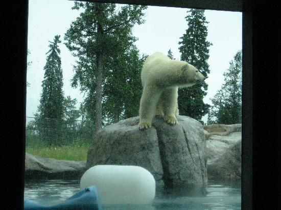 I recently had the pleasure of visiting the Polar Bear Habitat and Heritage