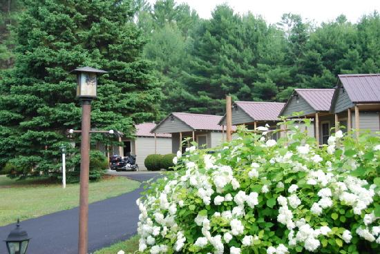 Pine Tree Motel &amp; Cabins: hydrangea