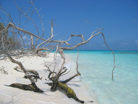 مطاعم ‪Los Roques National Park‬