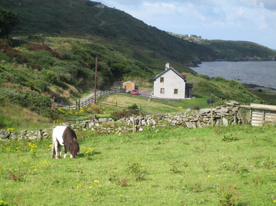 Bantry, : a pony in front of the house