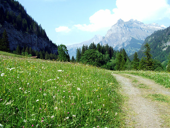Meadows in May, Kandersteg