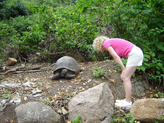 Coco de Mer - Black Parrot Suites : Tortoise in La Digue