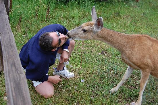 Dancing Wolf Resort: Kissing a deer.