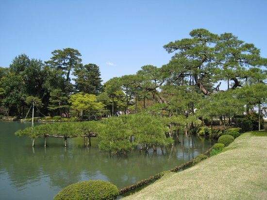 Kanazawa, Japonya: Pine tree over the pond