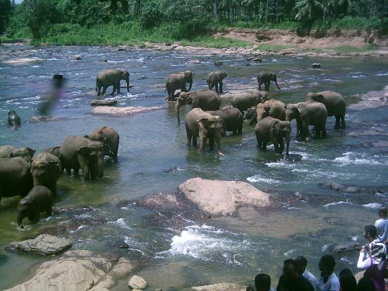 elephant bathing 1