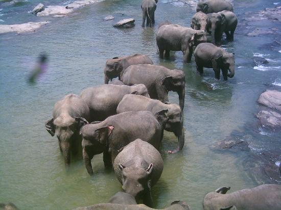 elephant bathing 2