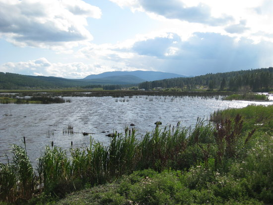 Cranbrook, Canada: bird sanctuary