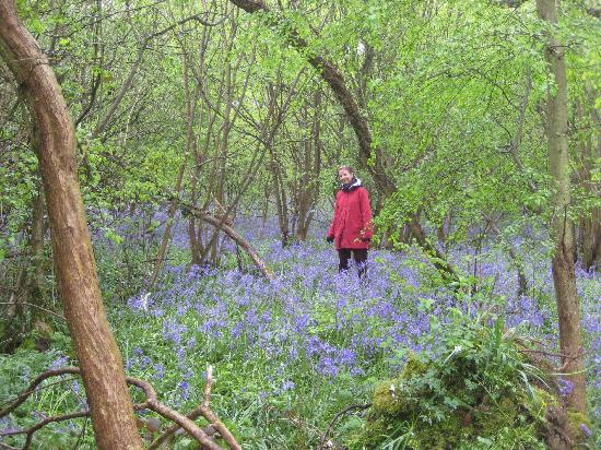 Orchard House: Bluebells!